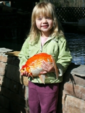 Giant Blackwater Creek Goldfish For Sale